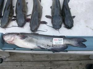 August's Winning Fish